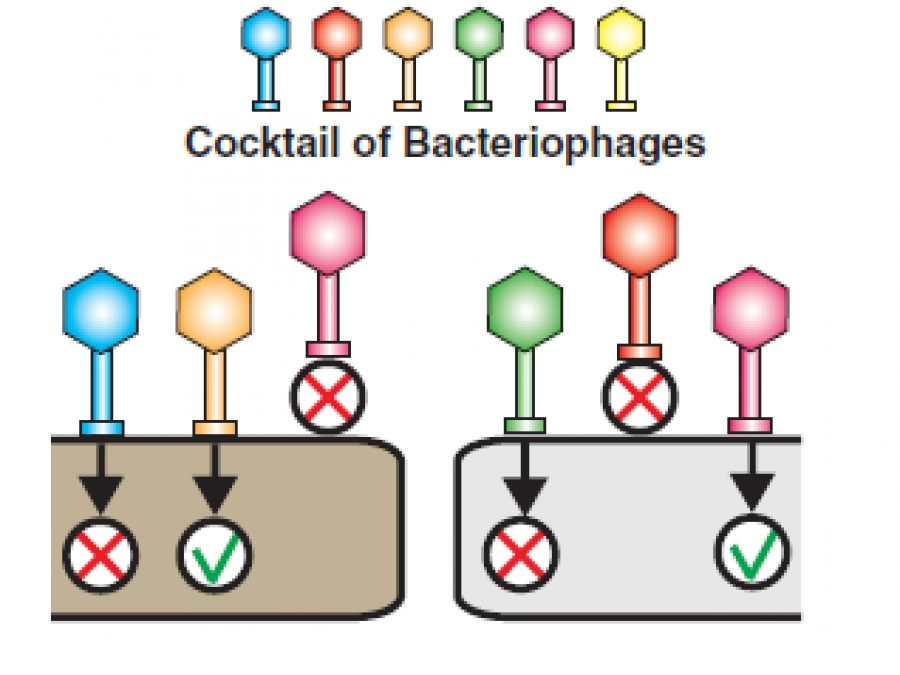 TechnoPhage receives FDA clearance to begin human clinical trials of an innovative biological therapeutic